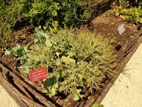 naturtraum-urban-farming-vielfalt-klein
