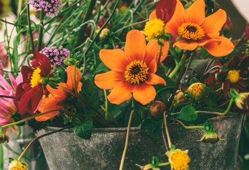 naturtraum-urban-gardening-klein