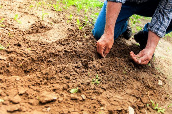 naturtraum-urban-farming-cover-02-mittel